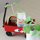 教室にある観葉植物 成長日記
